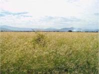 excelente oportunidad uso de suelo mixto sobre ave en Zapopan, Jalisco