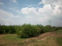 Terreno cerca de Carretera Nacional, 3,850 m2 en Linares, Nuevo Leon