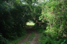 Perfect land for organic farm/permaculture project en Valladolid, Yucatan