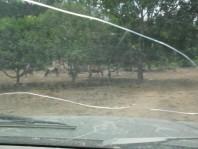 Rancho Los Criaderos SE VENDE con 400 hectáreas en Zapopan, Jalisco