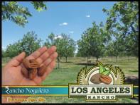 Precioso Rancho Nogalero en Durango, Dgo. Mx. en Durango, Durango