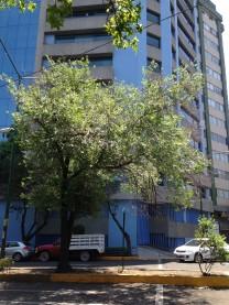 RENTA DEPARTAMENTO RECIEN REMODELADO en Ciudad de México, Distrito Federal