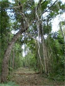 REMATO 25 HECTAREAS,INVERSIONISTAS DESARROLLADORES en Tulum, Quintana Roo