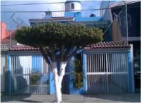 Casa en Tabachines Paseo de los Nisperos 1968 en Zapopan, Jalisco